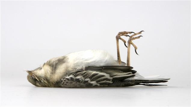 Comment viter que les oiseaux percutent vos fen tres - Comment effrayer les oiseaux ...