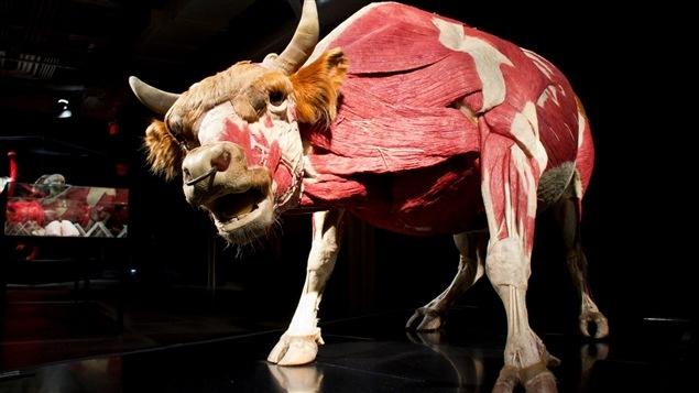 Pièce de l'exposition <i>Animaux à corps ouvert</i>, présentée au Centre des sciences de Montréal