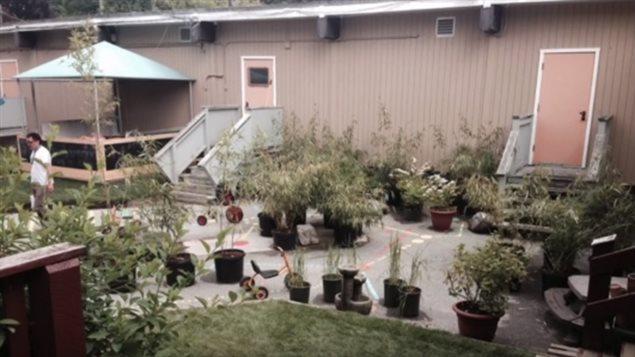 garderies_plantes