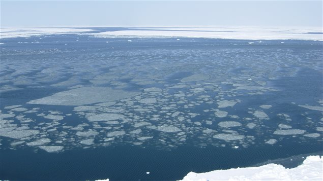 Fragmented sea ice and open water in southern Beaufort Sea, near Herschel Island, Yukon Territory, May 6, 2007.: a long and difficult swim should a bear decide to cross.