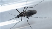 Deux matchs de baseball à Porto Rico en péril à cause du virus Zika