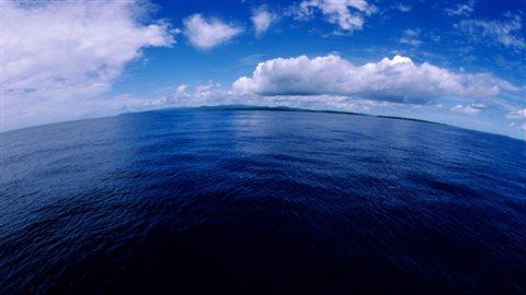 Les poissons au large de la côte ouest du Canada et qui fuient le réchauffement climatique se déplaceront vers le Nord de 10,3 à 18 km par décennie. Photo : CBC