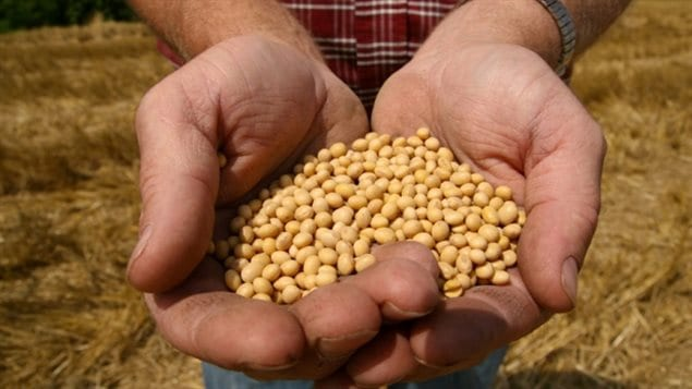 Soy Canada, a farming/marketing advocacy association wants the EU to explain a delay in EU approval for 3 GM soy products.