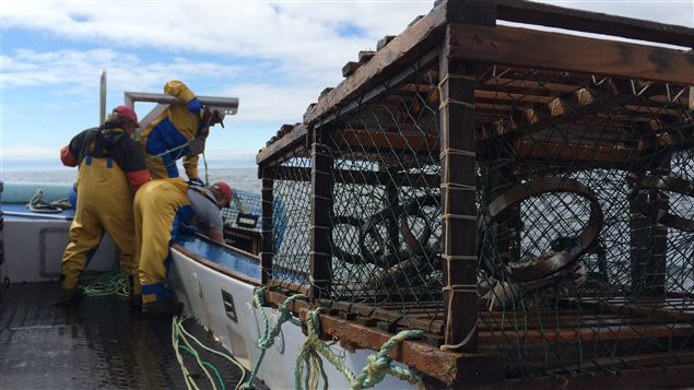 Levée de casiers de homard en Gaspésie