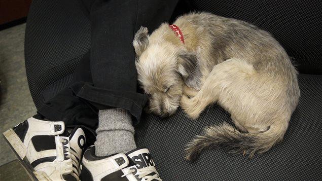 Ce chien dort à côté de son maître, après avoir été évacué de Fort Mc Murray, mais tous n'ont pas eu cette chance.