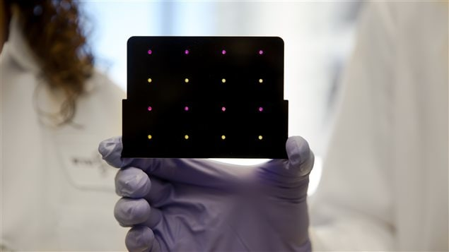 A black cartridge containing a paper-based diagnostic for detecting the Zika virus is held up by a researcher at Harvard's Wyss Institute. Areas that have turned purple indicate samples infected with Zika, while yellow areas indicate samples that are free of the virus.
