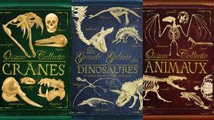 Crânes, Dinosaures et autres animaux préhistoriques et Animaux