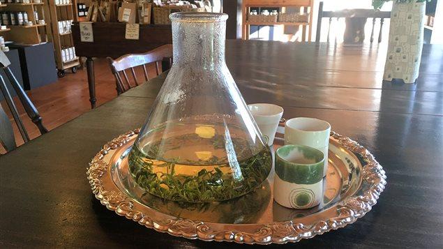 Le thé vert canadien de Teafarm