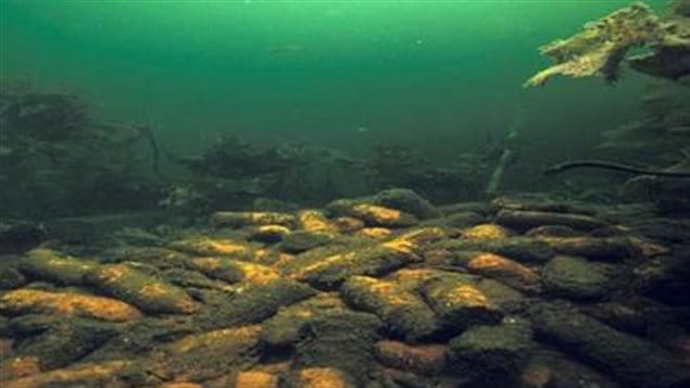 Piles of WWII 4.7in naval shells dumped on the ocean floor off Nova Scotia.