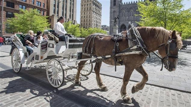 Un cocher et son cheval circulent devant l'église Notre-Dame à Montréal.