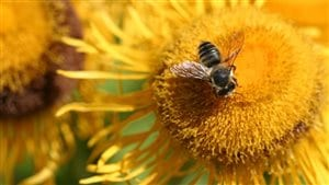 The United Nations has warned of a steep decline of bees and other insects that pollinate the plants we use for food.