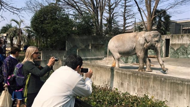 A Canadian blogger told of Hanako's story which brought the issue to world attention. Now she hopes the story will lead to more action to remove other captive elephants from zooz and place them in sanctuaries.
