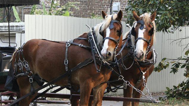 Cal�che � deux chevaux