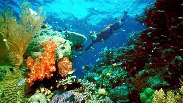 La Gran Barrera de Coral, en peligro de desaparecer.
