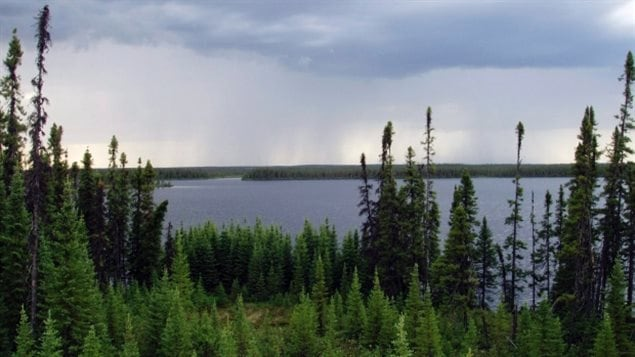 A vast boreal area in Manitoba and Ontario is a step closer to World Heritage Status. First Nations (aboriginal) groups and the provincial and federal governments have been working toward this goal for years. A UNESCO designation would result in greater restrictions on development of the mostly pristine boreal forest and the vast numbers of mammals, birds and fish that live there.