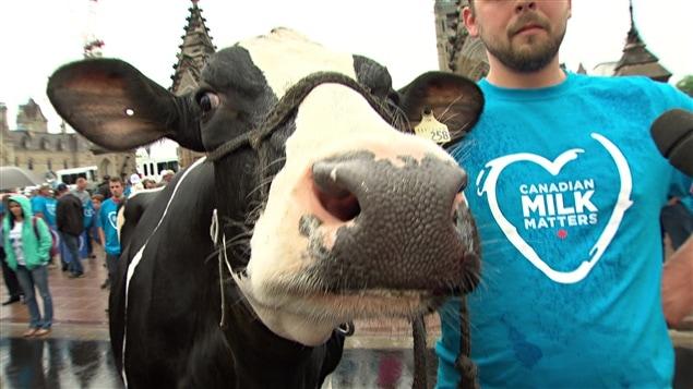 Une vache et son propriétaire réclament la protection de la gestion de l'offre à Ottawa