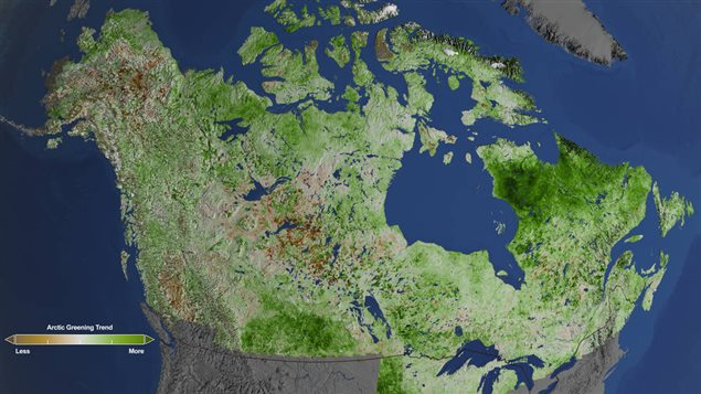 With 29 years of data from Landsat satellites, NASA researchers  saw extensive greening in vegetation across the entire Arctic, especially the tundra of Quebec and Labrador. Rapidly increasing temperatures in the Arctic have led to longer growing seasons and changing soils for the plants. Scientists have observed grassy tundras changing to scrubland, and shrub growing bigger and denser. Browning of the boreal can also be seen