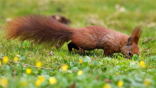 Un écureuil dans un parc