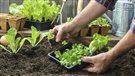 Les cinq meilleurs outils pour un jardinier averti