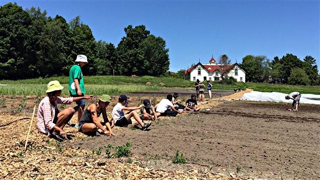 Des jeunes s'initient à l'agriculture urbaine à la Ferme Moore, à Gatineau.