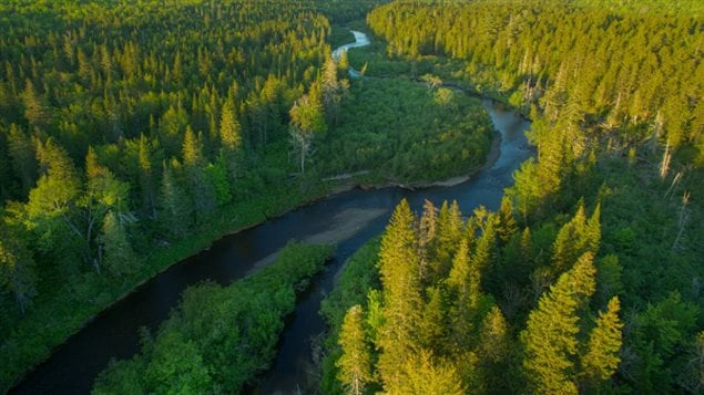 The Bartholomew River is part of the Miramichi River System, a top producer of Atlantic salmon located in the eastern province of New Brunswick.