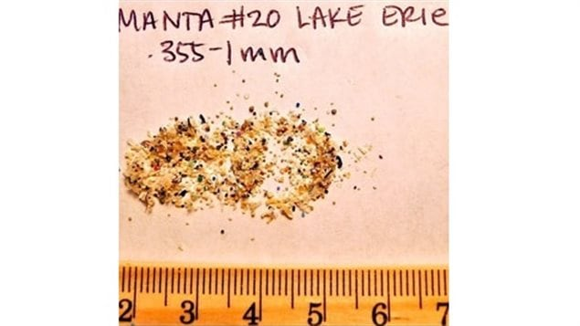 Microbeads in scale found in Lake Erie Microplastic particles also include polyester fibres released during typical household clothes washing