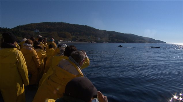 À Tadoussac ou dans l'archipel de Mingan, l'observation des baleines du Saint-Laurent émerveille les visiteurs en quête d'émotions fortes.