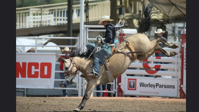 Traditional rodeo events like bucking broncs, and bull riding are always big attractions and the Stampede provides the biggest prizes of any rodeo in the world, thereby attracting the world's best.