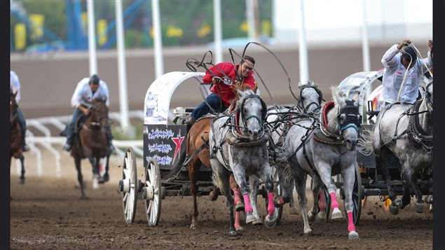 A major attraction among so many others at the exciting Calgary Stampede are the 'chuck wagon' races. Teams of horses, wagons, and outriders compete in a thrilling race which does have risks for both man and animal.