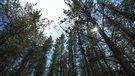 Les enjeux de la coupe forestière et de la déforestation