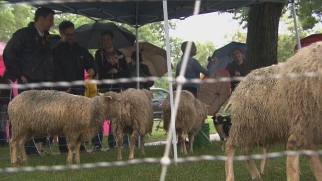 Residents in the Rosemont-la Petite Patrie borough of Montreal came out Saturday in the rain to view the new *green' lawnmowers in a local park.