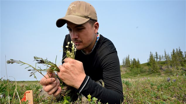 Botanist Paul Sokoloff collected plants in the Coppermine River region in the Northwest Territories in July 2014.