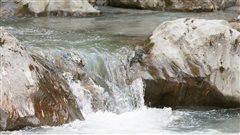 Une cascade dans un ruisseau