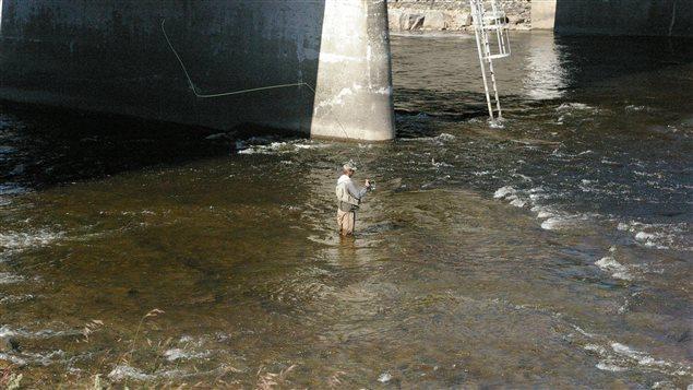 La pêche au saumon peut se pratiquer en plein centre-ville à Matane.