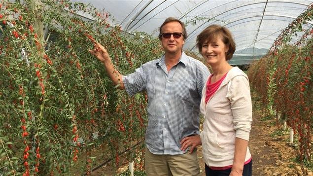 Denise et Peter Breederland dans leur ferme de baies de goji, à Aldergrove.