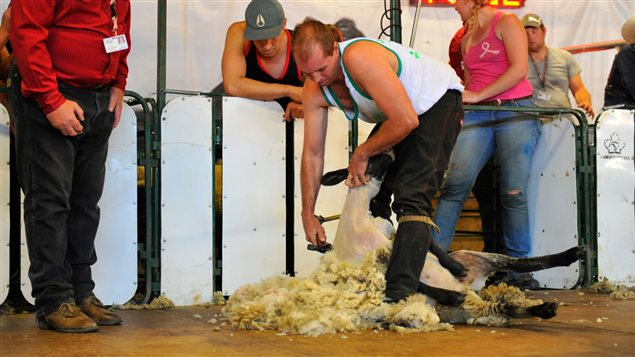 The international sheep shearing competition is also a big draw with thousands of dollars in prizes.