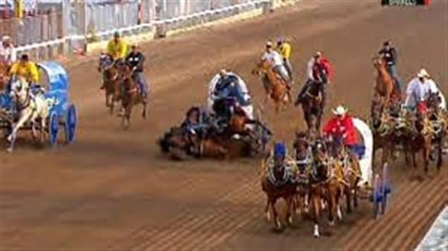 At the heart of the dispute between animal rights activists and the Calgary Stampede are events like this 2012 chuckwagon race crash in which one horse died instantly and two others were put down by veterinarians. We see a chuckwagon race taking place on a brown dirt track. We see four chuckwagons being pulled by teams of horses and out riders trailing them. In the middle of the track horses pulling a wagon have crashed to the ground with the wagon appearing ready to follow to the ground.
