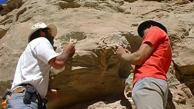 Professors Corria and Currie gently clearing the fossils from the surronding rock