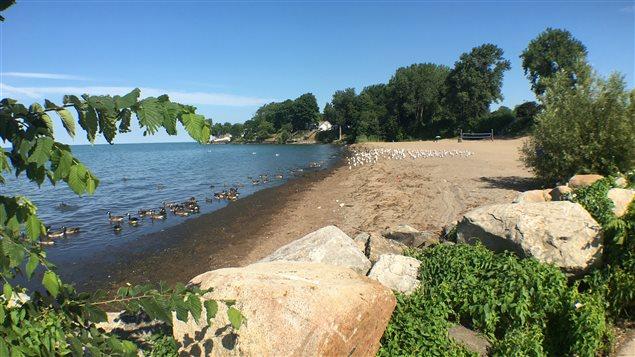 Faunes et flore se partagent les rives du lac Érié