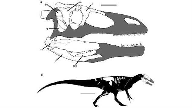 Graphic showing the fossil parts recovered