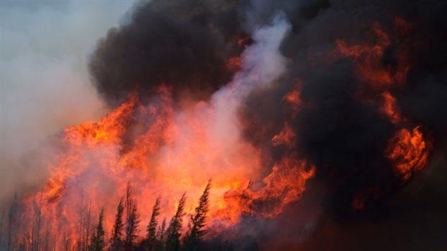 Un immense feu de forêt