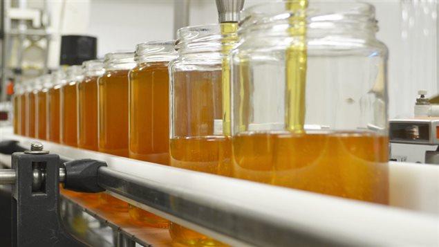 Coulée de miel à la miellerie de Miel Abitémis
