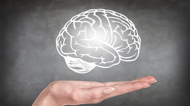 Dessin d'un cerveau humain