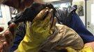 Déversement pétrolier en Saskatchewan: un grand impact sur les oiseaux