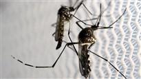 L'OMS se fait rassurante quant aux risques posés par le Zika à Rio