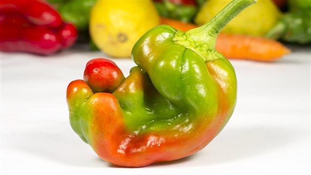 Les légumes moches ont déjà commencé à garnir les rayons de certains supermarchés.