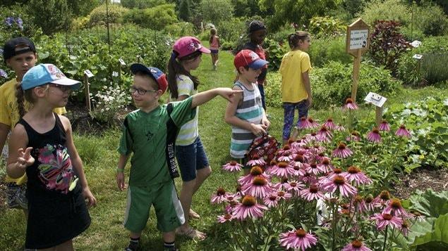 Dans ce grand jardin collectif de Saint-Jérôme sont accueillis régulièrement des jeunes de 6 à 11 ans.