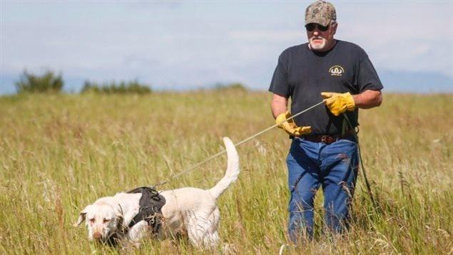 Ron Mistafa entrenando a su perro Duke en Alberta