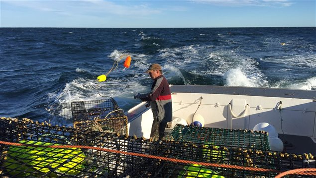 quatre pêches de poissons-proies dans l'Atlantique canadien : deux dans le golfe du Saint-Laurent et deux à Terre-Neuve-et-Labrador. Cette pêche commerciale est évaluée à environ 10 millions de dollars par année.