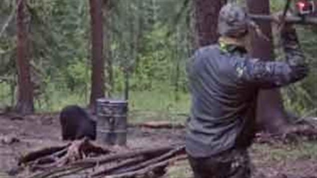 The video shows Bowmar winding up to throw the spear at the bear.